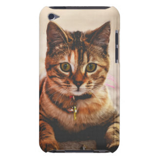 Cute Young Tabby Cat Kitten Kitty Pet iPod Touch Cases