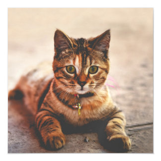 Cute Young Tabby Cat Kitten Kitty Pet Magnetic Card