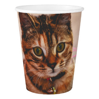 Cute Young Tabby Cat Kitten Kitty Pet Paper Cup