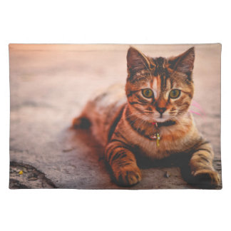 Cute Young Tabby Cat Kitten Kitty Pet Placemat