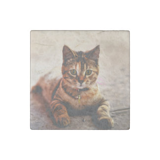 Cute Young Tabby Cat Kitten Kitty Pet Stone Magnet