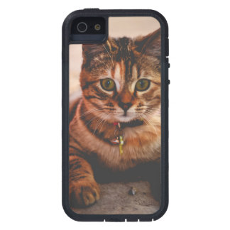 Cute Young Tabby Cat Kitten Kitty Pet Tough Xtreme iPhone 5 Case
