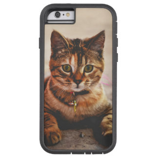 Cute Young Tabby Cat Kitten Kitty Pet Tough Xtreme iPhone 6 Case