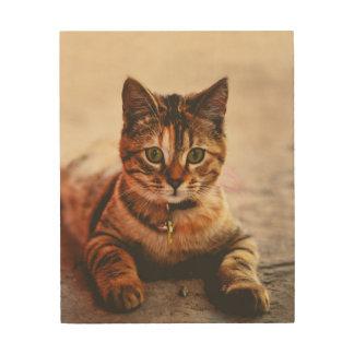 Cute Young Tabby Cat Kitten Kitty Pet Wood Print