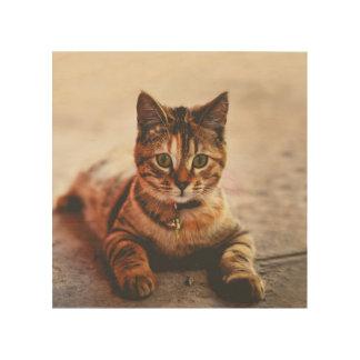 Cute Young Tabby Cat Kitten Kitty Pet Wood Wall Art