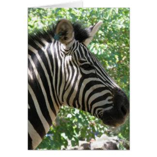Cute Zebra Greeting Card