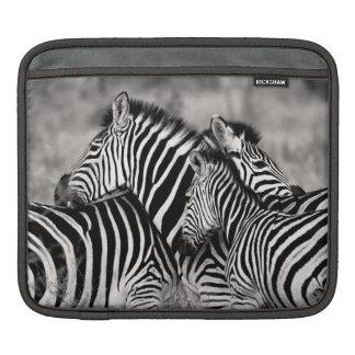 Cute Zebra Herd Nature Safari Black White iPad Sleeve