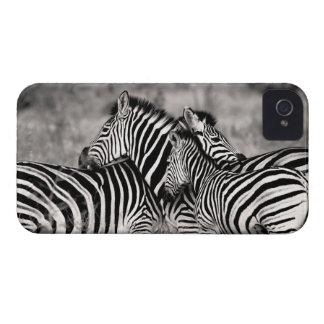 Cute Zebra Herd Nature Safari Black White iPhone 4 Case