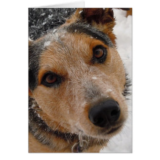 Cutest Australian Cattle Dog Christmas or Holidays Greeting Card