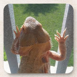 Cutest Bearded Dragon Photo Print Coaster