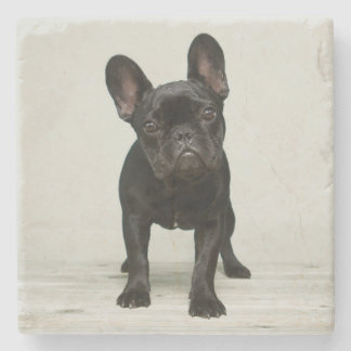 Cutest French Bulldog Puppy Stone Coaster