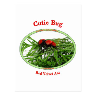 Cutie Bug Red Velvet Ant Wasp Postcard