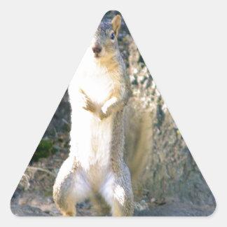 Cutie the Squirrel Triangle Sticker
