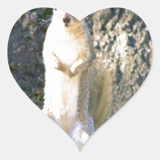Cutie the Squirrel Heart Sticker