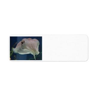 Cuttlefish Address Labels