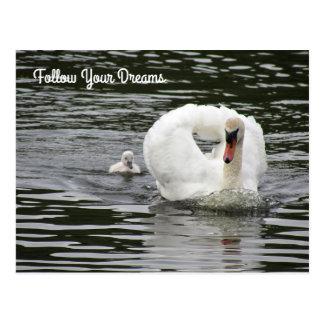 Cygnet Following Swan Postcard