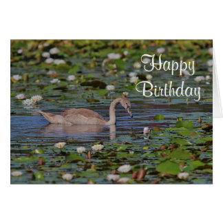 Cygnet - not an ugly duckling card