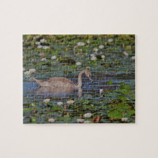 Cygnet swimming puzzle