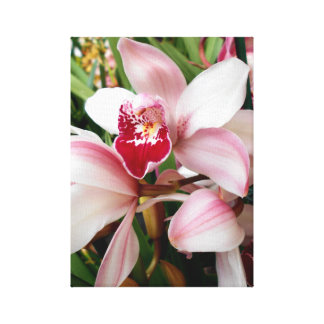 Cymbidium Orchids Blush with Pink Spotted Lip Canvas Print