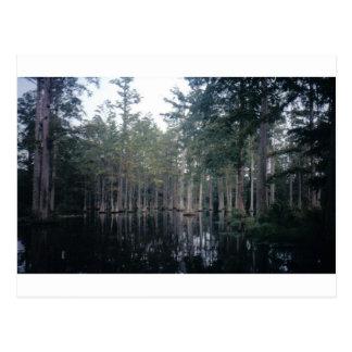 Cypress Swamp in Charleston, SC Post Card