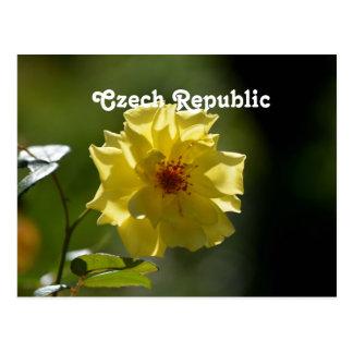 Czech Republic Roses Postcard