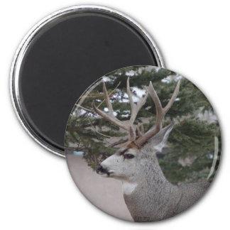 D0025 Mule Deer Buck 6 Cm Round Magnet