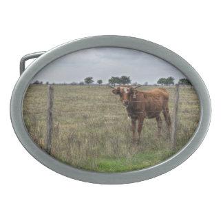 Da Brown Cow Oval Belt Buckles