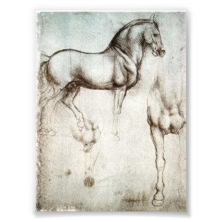 Da Vinci Horse Art Photo