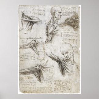 Da Vinci, Leonardo - Study of Anatomy Print