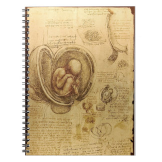 Da Vinci's Fetus Anatomy Notebook