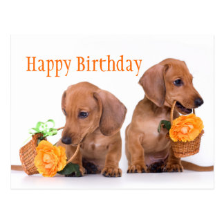 Dachshund Birthday Postcard