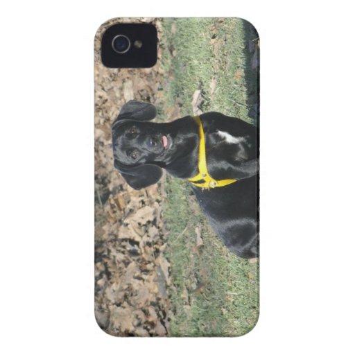 Dachshund Blackberry cover Blackberry Bold Cases