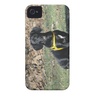Dachshund Blackberry cover iPhone 4 Case