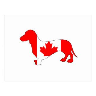 Dachshund Canada Postcard