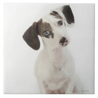 Dachshund/Chihuahua female puppy Ceramic Tile
