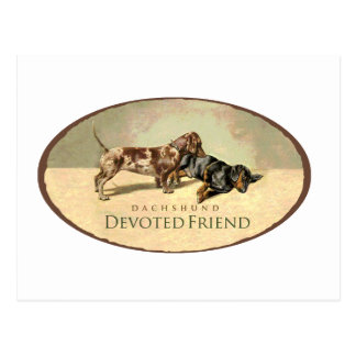 Dachshund..Devoted Friend Postcard
