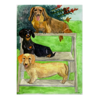 Dachshund Dog Portrait Poster