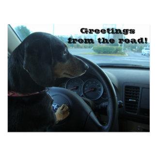 Dachshund-Driven Postcard