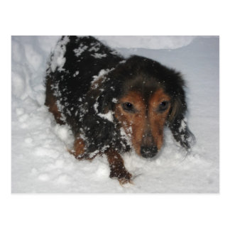 Dachshund in the Snow Postcard