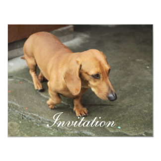 Dachshund Personalized Announcements