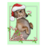 Dachshund Lilly's Candy Canes Postcard