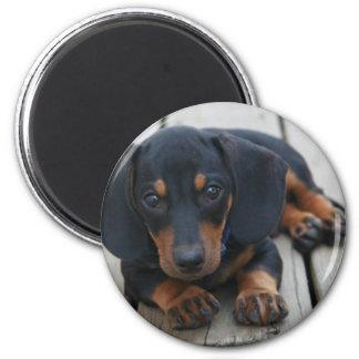 Dachshund Puppy Black 6 Cm Round Magnet