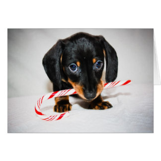 Dachshund puppy Christmas card