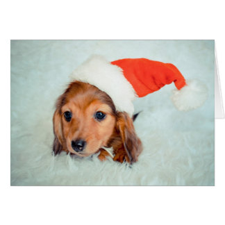 Dachshund Puppy Christmas Greeting Card