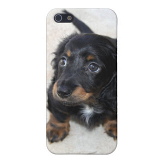 Dachshund puppy dog cute iphone 5c case, gift case for iPhone 5/5S