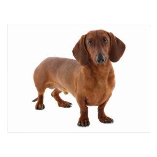 Dachshund Puppy Dog - Hello, Thinking of You, Love Postcard