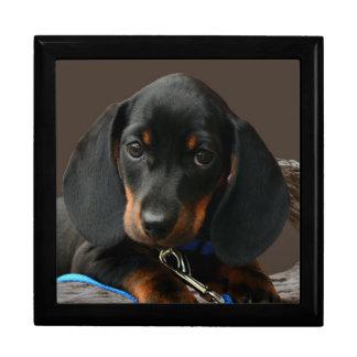 Dachshund puppy gift box