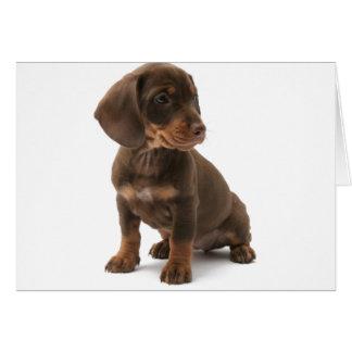 Dachshund Puppy Greeting Card