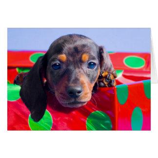 Dachshund puppy in gift box card