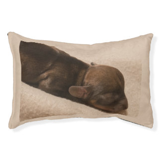 dachshund puppy pet bed